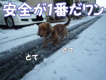 雪とどんぐり3