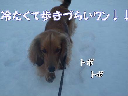 雪とどんぐり4