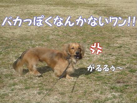 くわえ顔5