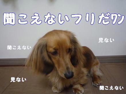 マイホーム記念日3