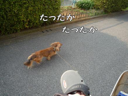 自転車犬、動画!1