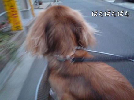 自転車犬、動画!2