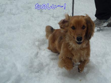 びしょ濡れ!雪遊び!! (旅行報告4)2