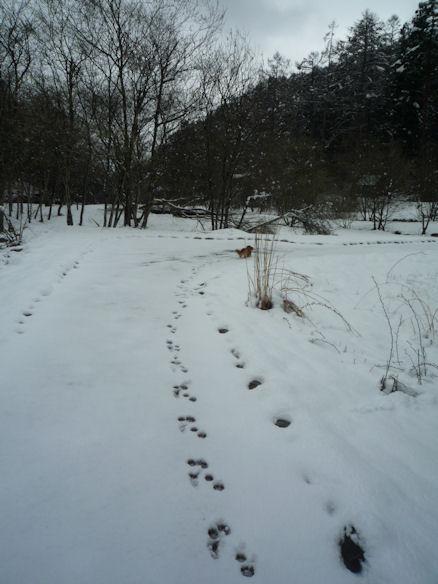 びしょ濡れ!雪遊び!! (旅行報告4)1