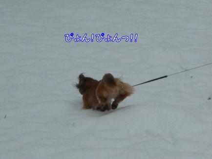 びしょ濡れ!雪遊び!! (旅行報告4)5
