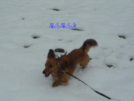 びしょ濡れ!雪遊び!! (旅行報告4)3