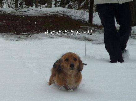 びしょ濡れ!雪遊び!! (旅行報告4)4