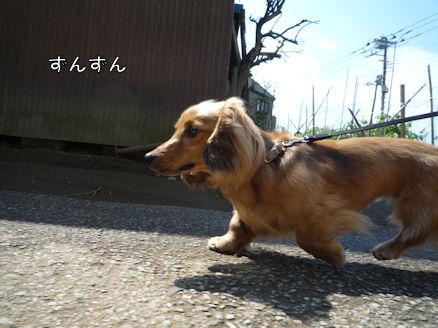 土曜日のお散歩2