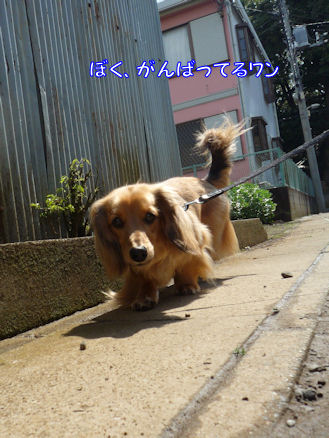 土曜日のお散歩3