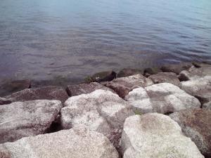 琵琶湖のからすさん(その2)