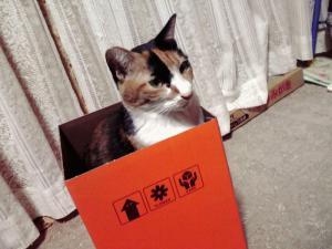 箱入り娘(ふつう)