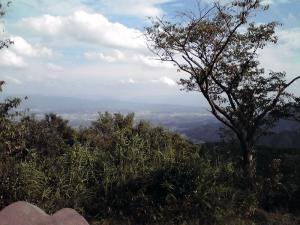 二上山登山(雌岳山頂から撮った町並み)