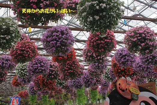 お花が天井から~