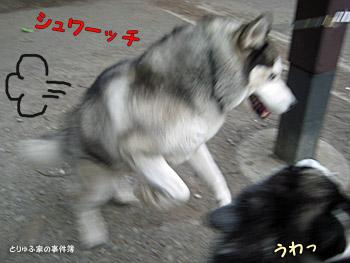 忍犬登場!