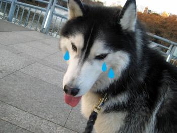 泣き落とし