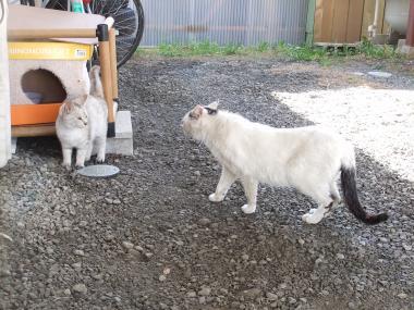春来と白猫その3
