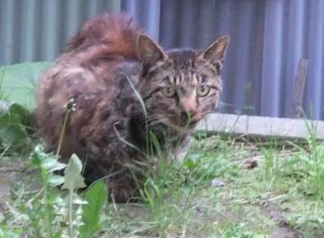 またも謎の猫