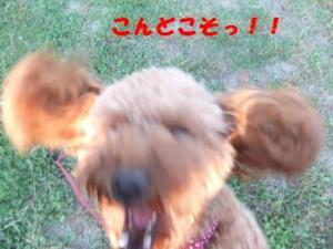こんどこそっ!(2)
