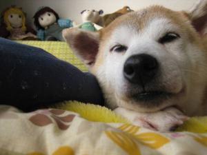 眠いんじゃ~