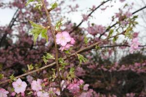 20110305花