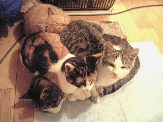 061204_夕食後の外猫達