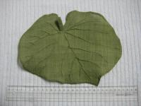 蓮の葉のサンポ(ほこりよけ?)