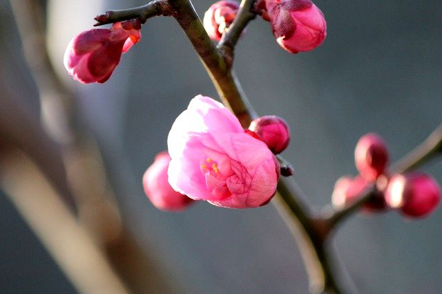 Aspring  premonition(春の予感)