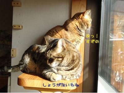 chami_koma37.jpg