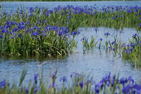 小堤西池-2
