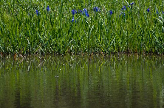小堤西池-7