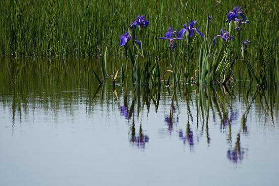 小堤西池-8