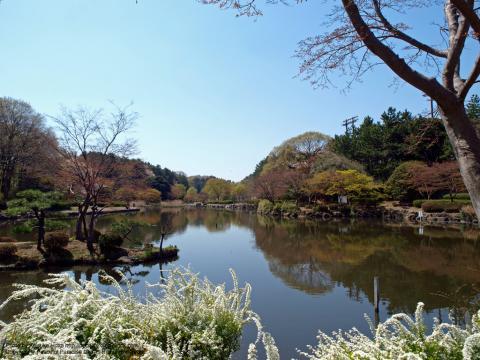 二俣川の大池