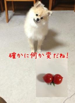 fc2blog_2013032717494204a.jpg