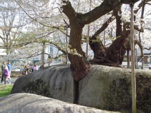 2011-05-02 東北応援団ツアー2 083
