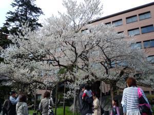 2011-05-02 東北応援団ツアー2 082