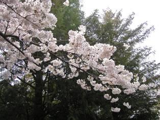 熊野神社(2)