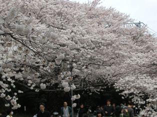熊野神社(9)