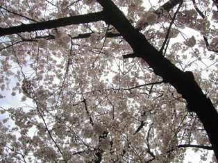 熊野神社(16)
