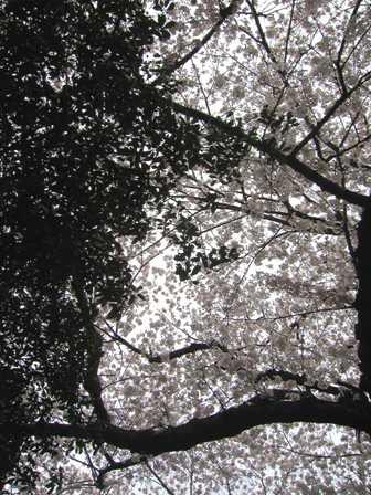 熊野神社(19)