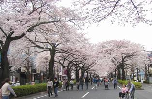 平和通り(2)