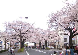 平和通り(4)