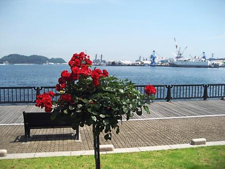横須賀_3541