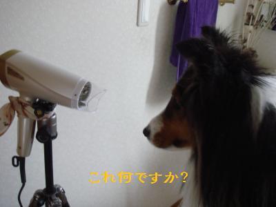 DSC05198_convert_20130324235921.jpg