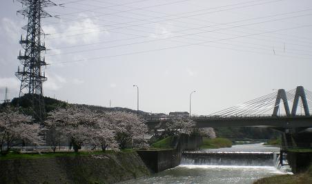 田上本町朝霧桜と命名!