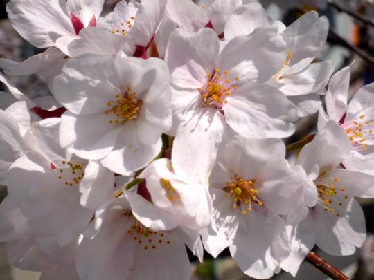 koushuichiba13_03-04.jpg