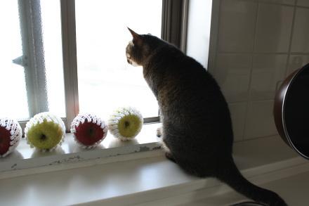 窓辺のアイシス