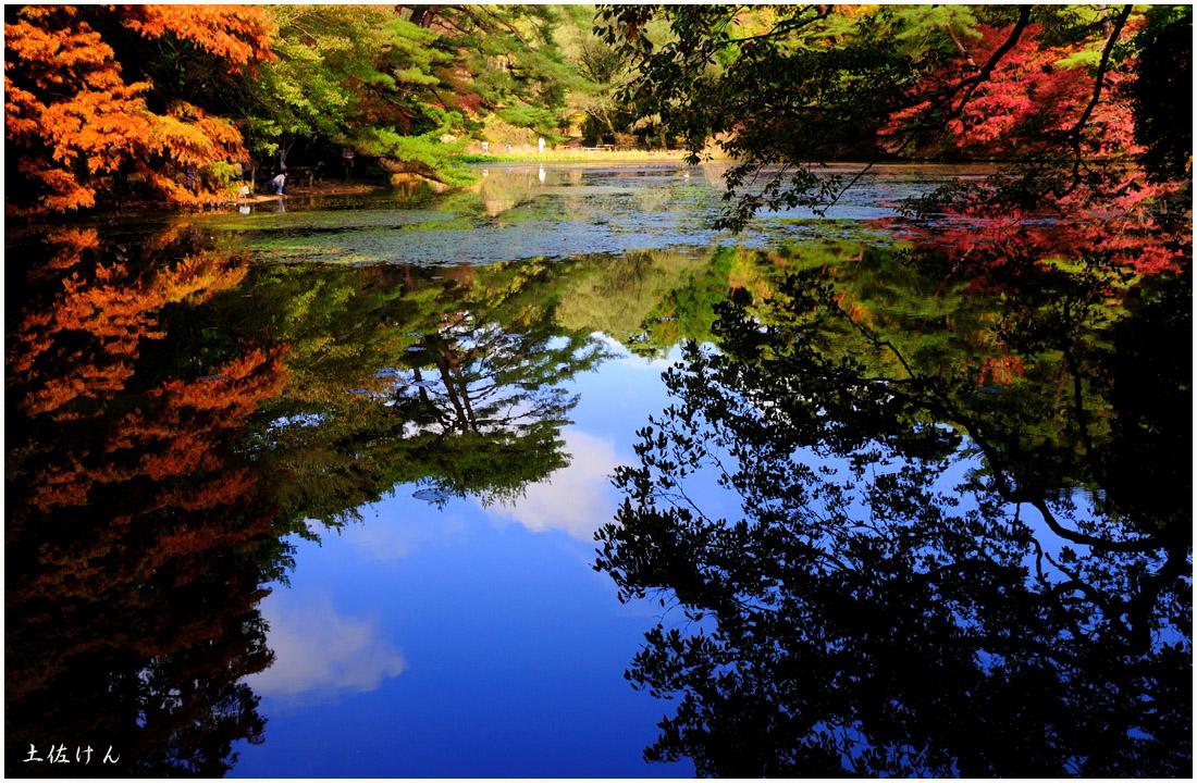 神戸市立森林植物園6
