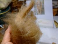 ゴンさんの犬毛