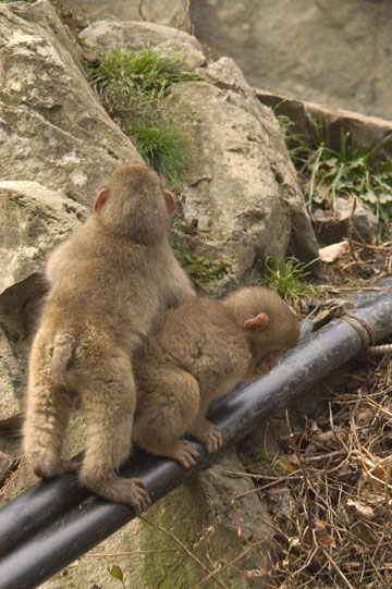 blog 5726 Babies on Pipes-12.05