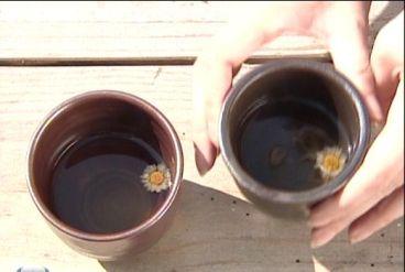 65野菊のお茶